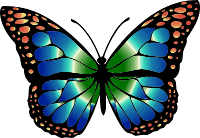 blue green butterfly