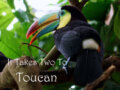 It takes Two to Toucan