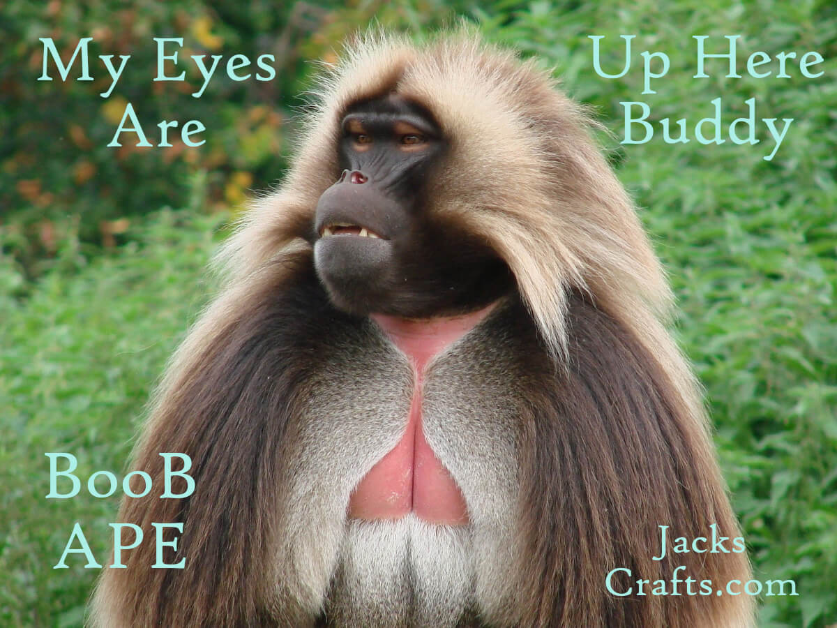 BooB APE My Eyes are up here Buddy Apes